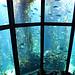 Riesige Tanks mit Kelp (Seetang), die die Umgebung im Pazifik simulieren