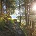 Gut ausgebauter Waldweg