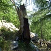 skurrile Baumgestalten