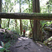 Auf dem Steep Ravine Trail