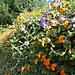 Blumenreiche Hecke