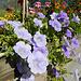 An der Bushaltestelle wird man von einem Blumenbouquet begrüßt.