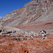 Nachmittags wird die Querung von Gletscherbächen zur Tortour