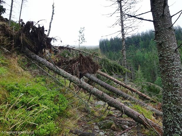 Immer wieder umgestürzte Bäume am Weg