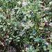 Heidelbeeren/Schwarzbeeren gibt es noch in Hülle und Fülle