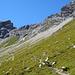 Unterwegs Richtung Oberzalimsattel in der Ostflanke des Oberzalimkopfes