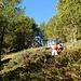 Salita per Alpe di Sceru