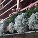 Incantevoli allestimenti floreali