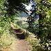 auf dem Wald- und Erlebnispfad Todtnauberg, östlich vom Horn