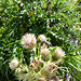 Blumenbesucher