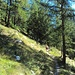 l' inizio in un bel bosco di larici