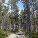 Durch schönen Wald führt der Weg hinunter.