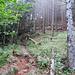 großflächig ist der Weg mit gefällten Bäumen übersät