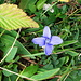 eine der wenigen Blüten
