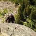 Sehr steile Kletterei