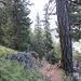 Der erste Teil des Aufstiegs erfolgt durch den Wald