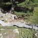 Baumskulpturen Im Bergwald zwischen Schäferhüttli und Häüschbielen