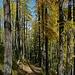 Wegbild im Wald