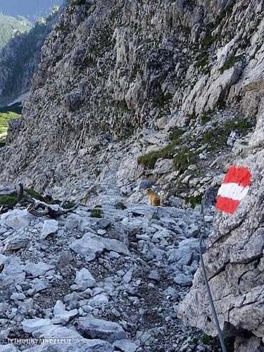 Ziemlich steiler Abstieg Richtung Rosskar