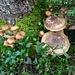 schöne Pilze
