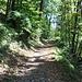 Aufstieg bis zur Abzweigung im Seerenwald (720 m).