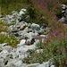 Kuscheltiere gab es auch zu sehen (marmot).