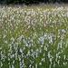 Blumenwiese im Abstieg