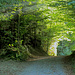 Sonnenstrahlen leuchten durch den Riffig Wald.