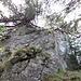 Die erste Felsstufe auf dem Nordostgrat im Aufstieg zum Schär-Nordgipfel kann dank der Föhren und guten Tritten leicht überwunden werden. Allerdings ist diese Stelle vermutlich immer etwas feucht und daher an einigen Stellen etwas rutschig.