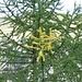 Zum Zeitpunkt der Wanderung waren erst einzelne Äste der Lärchen gelb eingefärbt. In einem Monat wird wohl das gesamte Tal goldgelb leuchten.