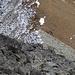 Wie mit einem Lineal gezogen, wechseln graue und bräunliche Gesteinsarten.