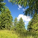 durch Wald und über Wiesen