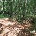 Die Abzweigungen im Wald sind nicht immer eindeutig - hier rechts