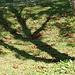 Eine Wiese gibt es hier und den Schatten eines Baumes.