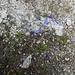 Auch auf 2600 Meter gibt es noch Blumen
