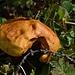 Pilz, mehr weiss ich auch nicht. ;-)