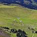 die Potersalp unterhalb der Chammhalden (die folgenden Alphütten sind zu sehen: Chamm / Schwarzhütte / Luser / Rain)