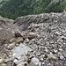 viele enorme Geröll- und Schuttrinnen auf den steilen Alpflächen