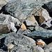 Gesteinsvielfalt auf dem Glacier Trail