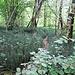 Pfad durch den Sumpfschachtelhalm
