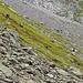Steinböcke auf dem Weg zur Leutschachhütte