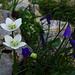 bunte Blumenpracht am Weg