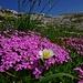abwechslungsreich zeigt sich die Flora