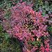 Auch die Heidelbeeren-Stüdeli melden Herbst