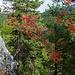 Erste zaghafte Herbstfarben