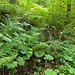 Viel Grün im Abstieg zum Gross Chessel