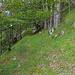 Aufstieg vom Rüschgraben zum Dilitsch-Westgrat