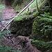 Brandegg-Dschungel