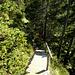 Im Abstieg vom Gamskogel sind immer wieder solche Holztreppen anzutreffen.