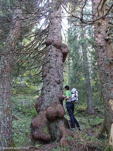 Mächtige Bäume am Wegesrand...